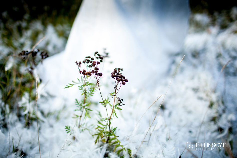 Plener ślubny warta poznań pióra bitwa
